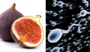Smokva-Spermatozoidi-490x289-300x176